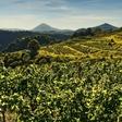 Podívejte se k vinařům do sklepa a ochutnejte znamenité české víno!