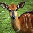 V Zoo Liberec celé léto komentované prohlídky