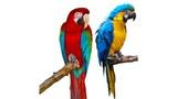 Burza okrasného ptactva na výstavišti v Českých Budějovicích