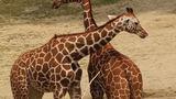 Se zvířecím příjmením do Zoo Brno zdarma