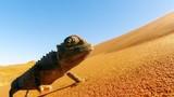 NOVÉ 3D FILMY DIVOKÁ AFRIKA A PIDIOBŘI