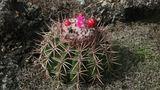 Trojská botanická zahrada představuje kaktusy a sukulenty Ameriky