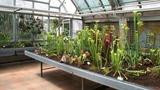 Výstava kaktusů a jiných sukulentů