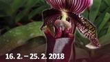 Výstava orchidejí, bromelií a jiných exotických rostlin a hmyzu