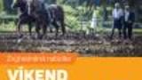 Víkend s koňmi v akci