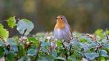 Ptáci naší zahrady - Botanická zahrada Praha Troja