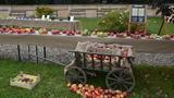 Ovocnářská výstava v Žatci již má svoji tradici