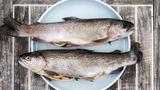 Sladkovodní ryby