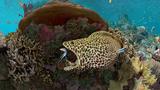 Korálový útes 360