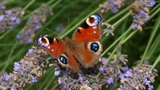 Motýlí louka v zoo Ostrava