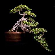 Obdivujte unikátní bonsaj jasanu čínského a dalších sto miniaturních ručně tvarovaných dřevin v Troji