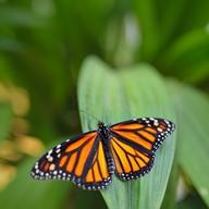 Víkendový program v Botanické zahradě hl.m. Prahy - výstava motýlů a koncert pod širým nebem