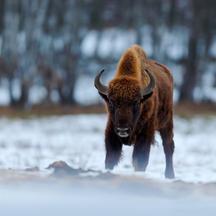 Film Planeta Česko ukazuje zcela zblízka fascinující dobrodružství zvířat a přírody kolem nás