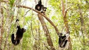 Madagaskar: Království lemurů 3D 3D