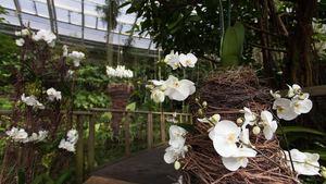 Výstava orchidejí ve stylu karnevalu Rio de Janeiro