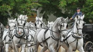 Den starokladrubského koně a Muzejní noc
