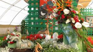 Výstava květin Čimelice 2017
