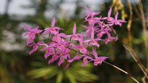 Výstava orchidejí v Botanické zahradě hl.m. Prahy