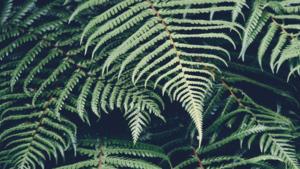 Zvukový koncert inspirovaný přírodou