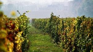 Degustace vín Ampelos