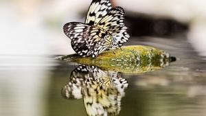 Papilonia – unikátní motýlí dům v Praze