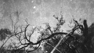 Kristýna Erbenová - Moondust