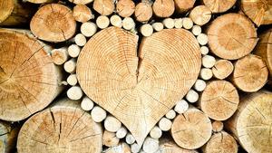 Den dřeva na Sluňákově