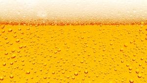Slavnosti piva 2019 - Výstaviště České Budějovice