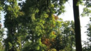 Škůdci dřevin a jejich diagnostika 2019 - Výstaviště Flora Olomouc