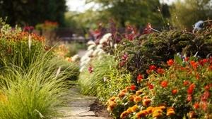 Procházky zahradou s odborníkem