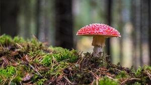Poznávání podzimních hub – Zamykání lesa na Zelené hoře