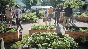 Festival městského pěstování a kompostování
