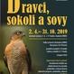 výstava Dravci, sokoli a sovy