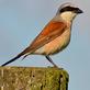 Vítání ptačího zpěvu v Mariánských Lázních