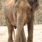 Slon je úžasné zvíře, stojí to za to, poznat ho blíže