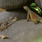 Zoo Praha: BOUŘLIVÉ NÁMLUVY V EXPOZICI KATTAKUM