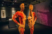 Výstava Body The Exhibition pro velký zájem prodloužena