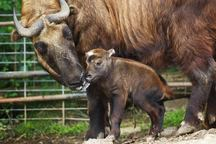 V pražské zoo se narodily stovky mláďat