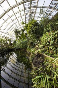 Džungle, která nespí - Večerní provázení Botanickou zahradou