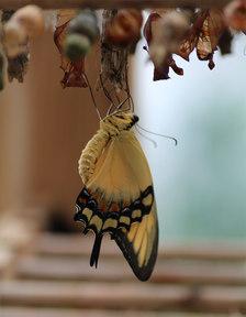 Výstava exotických motýlů