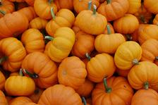 Dýňová slavnost v Jeseníku