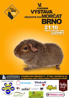 V. Podzimní výstava morčat v Brně