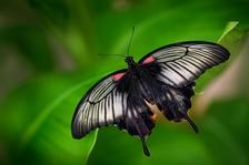 Do skleníku Fata Morgana se vrátili tropičtí motýli