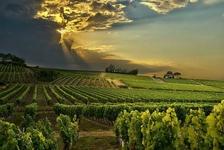 Degustace francouzských vín z oblasti Rhôny