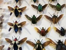 Entomologická výstava v OTROKOVICÍCH, 13.10.2018