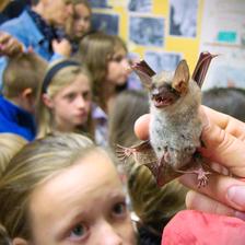 Mezinárodní noc pro netopýry na Lipové