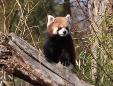Jarní prázdniny v Zoo Ústí nad Labem