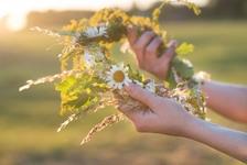 Vonná stezka – svatojánské byliny