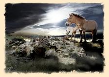 """Výstava """"Jak se divokým koním vrací svoboda - ze skicáře malíře Jana Sováka"""""""