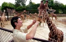 Zoo Dvůr Králové a její lví safari